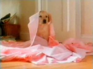 Old Andrex puppy advertisement