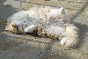 Mulberry lying on his back