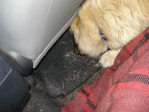 Stella can's fit under the seat now!
