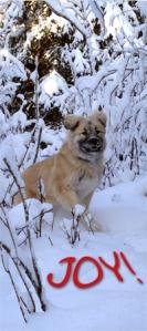 Stella loves the snow!