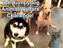 Rumpy-blogger-challenge
