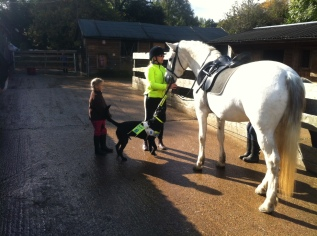 Helping at the stables