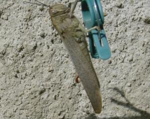 Jiminy - the prime suspect