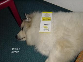 Clowie, Pyrenean Mountain Dog, sleeping