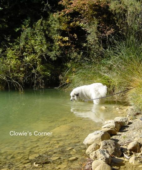 Clowie in a stream