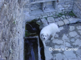 Clowie, Pyrenean Mountain Dog, Great Pyrenees, at Janovas