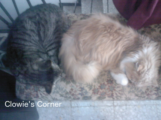 Two cats sleeping - Pippin, tabby, and Mulberry, Persian