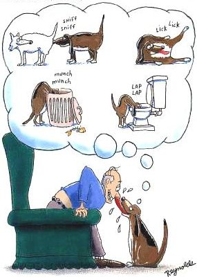 Cartoon of dog raiding rubbish, drinking from toilet etc.