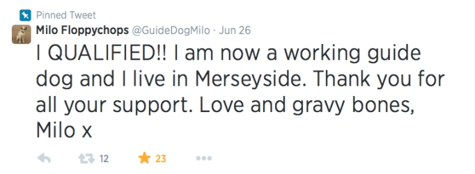 Milo's tweet about qualifying as a guide dog