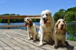 Emma, Bailie and Katie at the lake, dogs