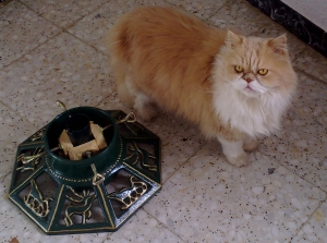 Mulberry, Persian Cat, with Christmas tree stand